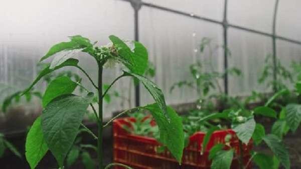 พลาสติกกับ 7 ประโยชน์งานเกษตร สุดยอดตัวช่วยราคาถูก ที่ช่วยเพิ่มมูลค่าให้ผลผลิต